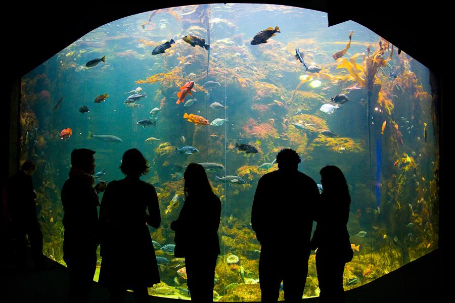 San Francisco Musée histoire naturelle