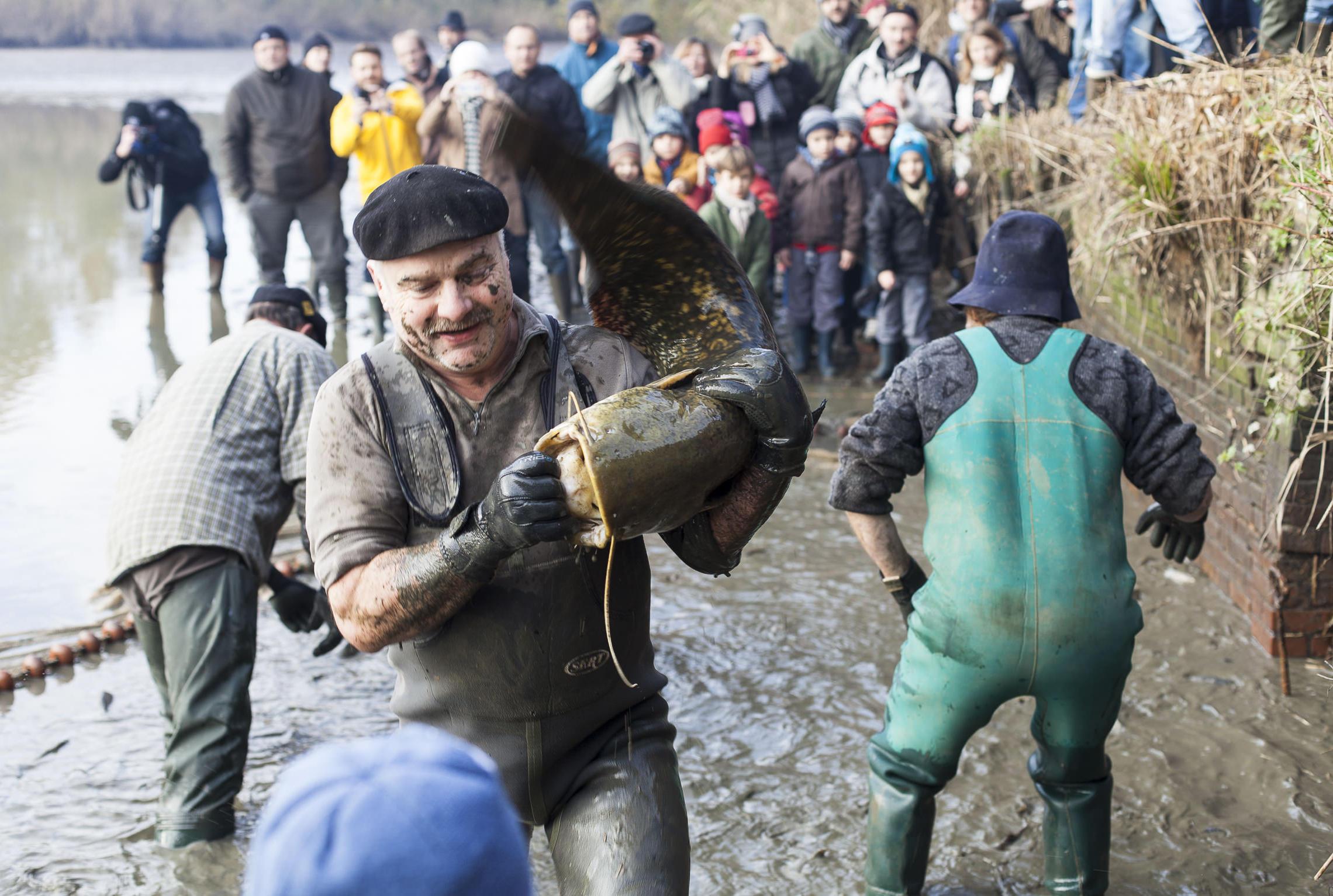 Sologne, tradition pêche d'étang - Allez Gizèle