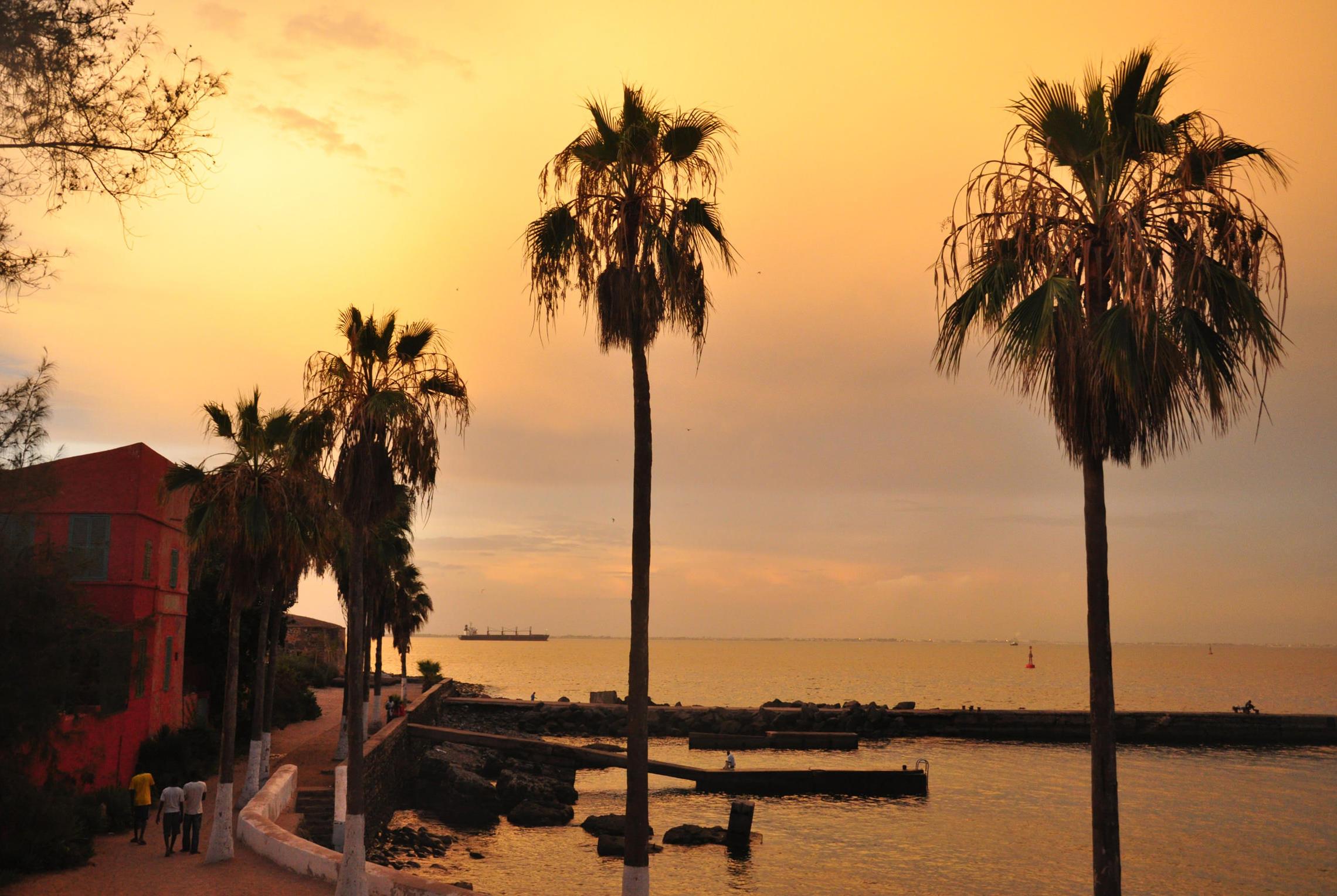 Sénégal, palmiers sur l'île de Gorée