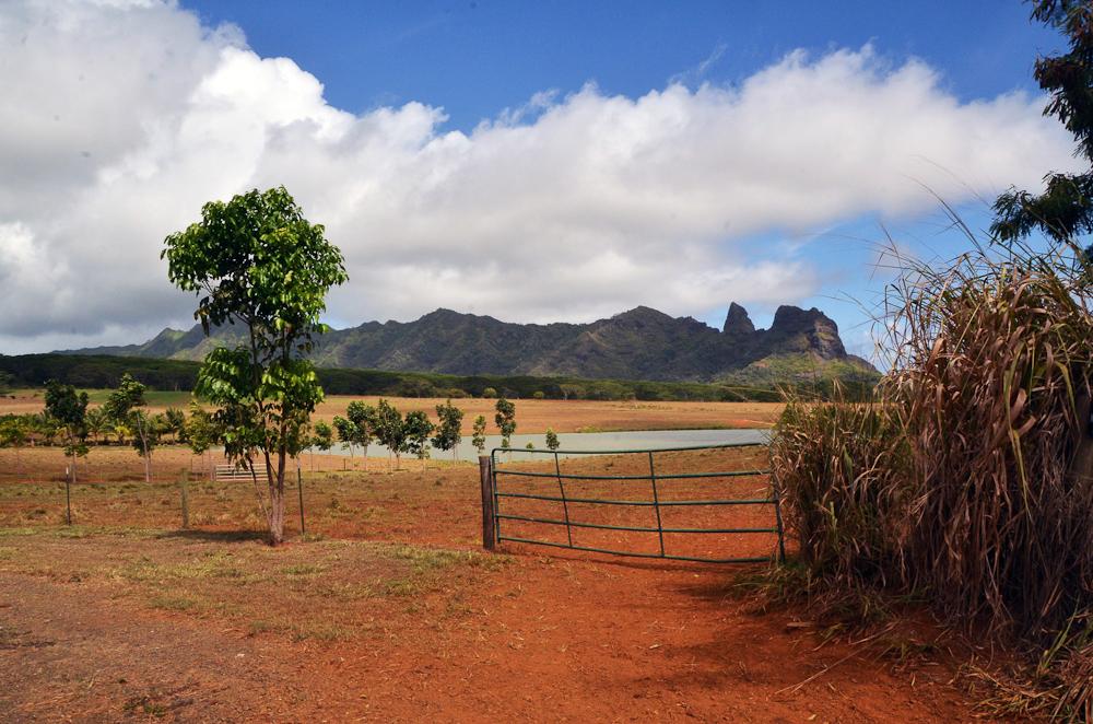 Environs de Kapaa Hawai Kauai