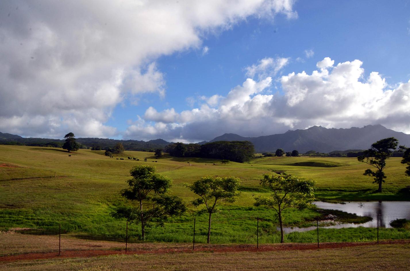 Jurassic-Kahili-Ran-Kauai-Hawai