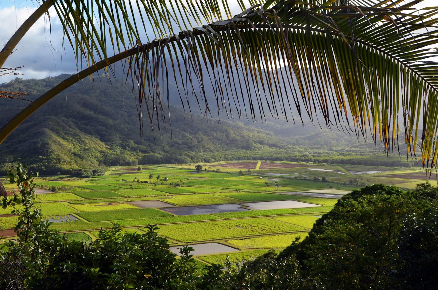 Hanalei-Valley-Kauai