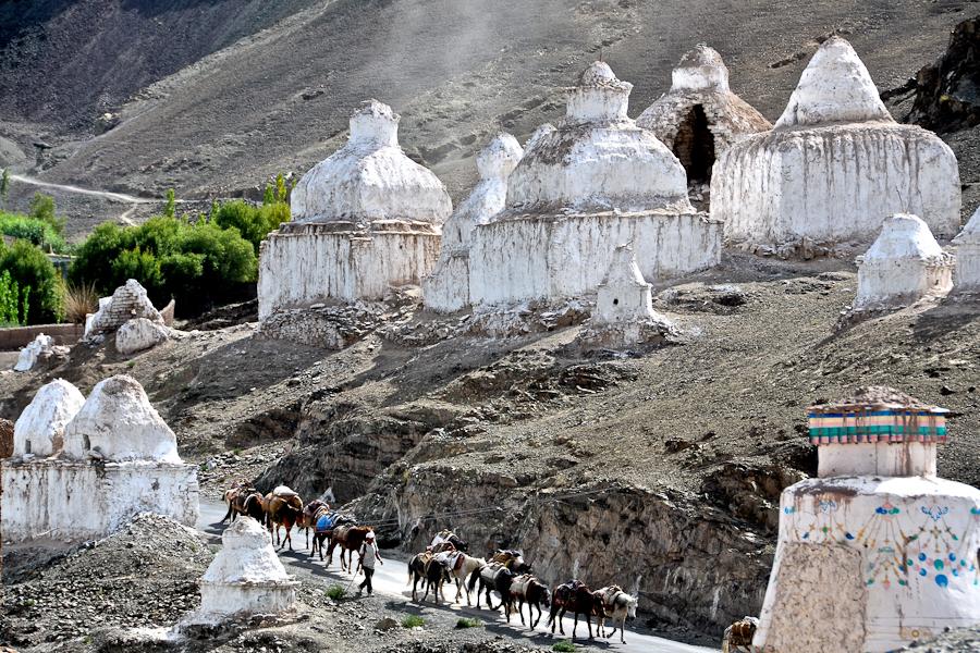 Ladakh Himalaya trekking